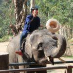 タイでおすすめの象乗り体験!川下りや山登り、象との触れ合いも